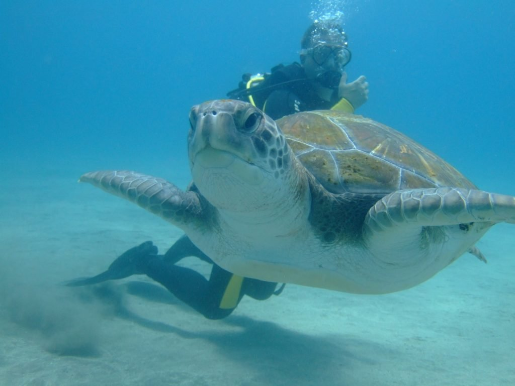 Introvert scuba diving with a turtle